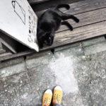 [購物] 台灣好物:南.登機口 Southgate 輕便帆布鞋