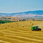 [記旅] 從 Siena 出發:透過viator.com訂購local tour遊托斯卡尼平原 經驗談與照片記錄