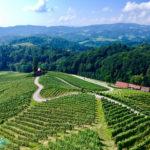 [記旅] 2018冰火謳歌:斯洛維尼亞Špičnik最浪漫葡萄園心形路
